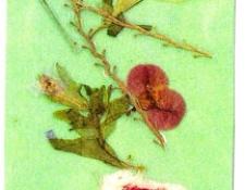 seoulflower